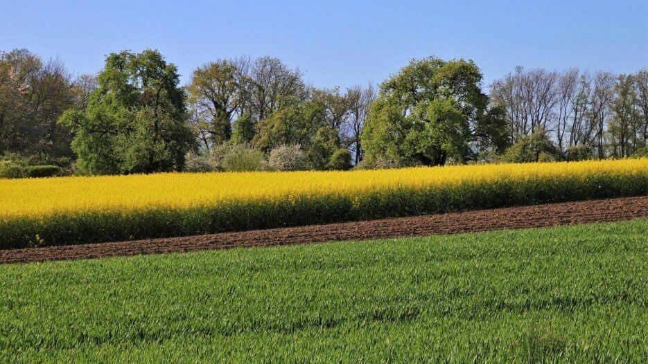 Jak stosować środki ochrony roślin w rolnictwie, aby uzyskać dobre zbiory